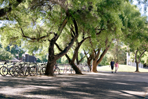 UC Davis campus