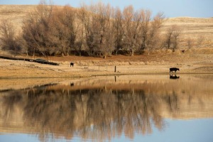 Cattle ranch during drought